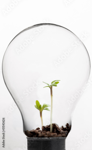 Seedling inside light bulb