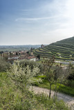Panoramic view the vineyards in the Valpolicella