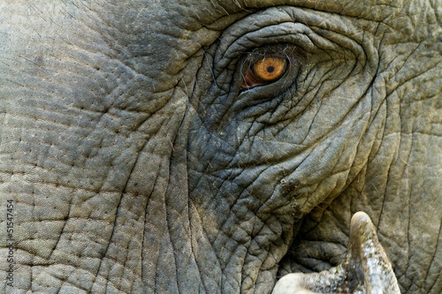 Fototapeten,elefant,ashtray,close-up,close-up