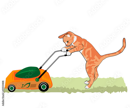 red cat with a lawnmower