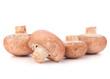 Brown champignon mushroom group