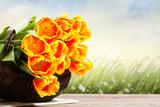 Tulpen vor Sommerwiese