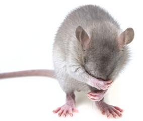 a little mouse hiding her muzzle