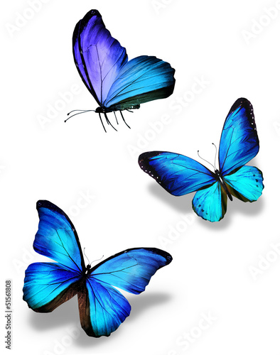 canvas print picture Three blue butterflies, isolated on white