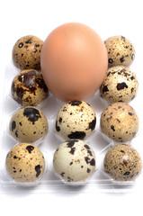 Huevos de codorniz y de gallina