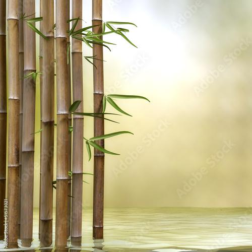 Bambus im Wasser - 51573021