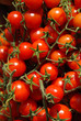 Cherry tomato for sale