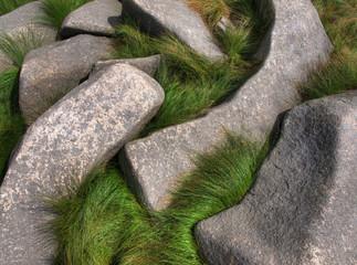Gras zwischen Felsen