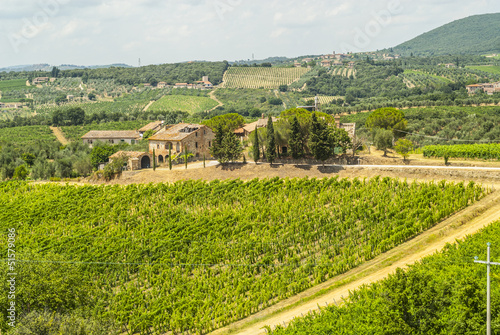 Tuscany - Chianti vineyards