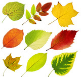 collection of tree leaves on white background