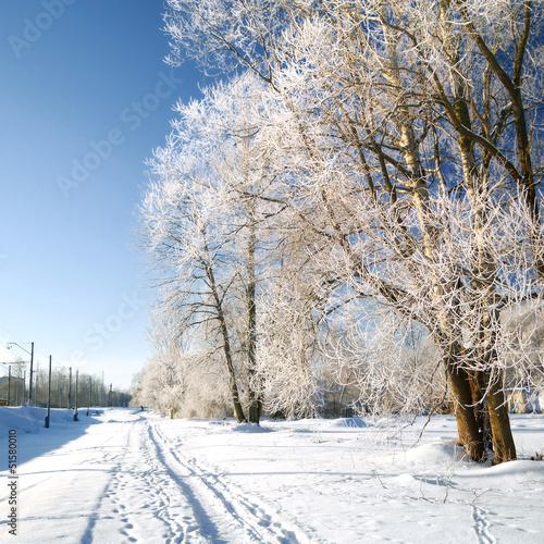 mróz na drzewa w pobliżu drogi i kolei