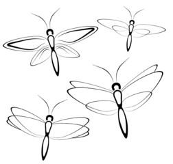 Butterfly 1904