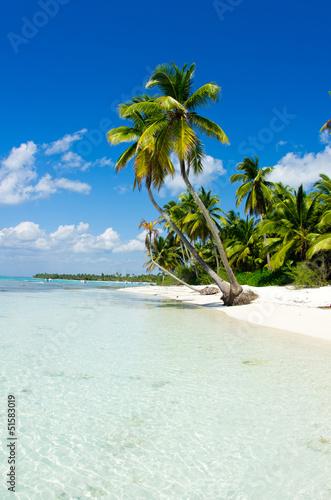 Fototapeten,strand,meer,ozean,palme