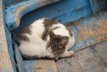 Cat sleeping in a boat of Essaouira