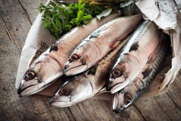 mackerel - sgombri
