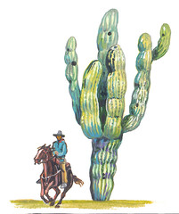 Saguaro (Carnegiea gigantea). The biggest cactus in the world.