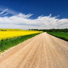 countryside road and yellow rapeseed field