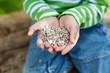 kleines kind hält blumensamen in der hand