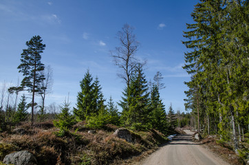 Dirt road in a nordic forest