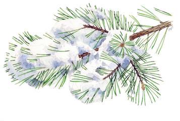 Pino silvestre con neve - Pinus sylvestris