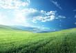 field of spring grass