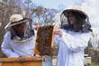 Pszczelarze w pasiece