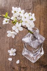 ramoscello di ciliegio fiorito in bottiglia di vetro