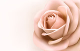 Fototapety Background with beautiful pink rose. Vector