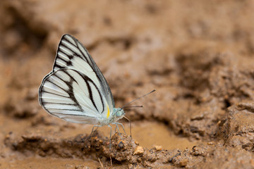 White butterfly on the ground