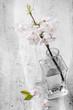ramo di ciliegio fiorito in bottiglia di vetro