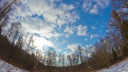winter forest, timelapse