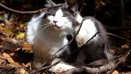 頭がかゆい猫