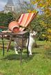chat en visite