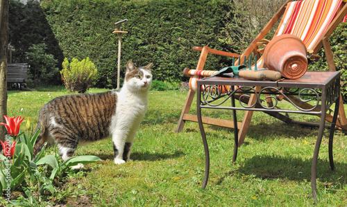 chat en visite dans le jardin