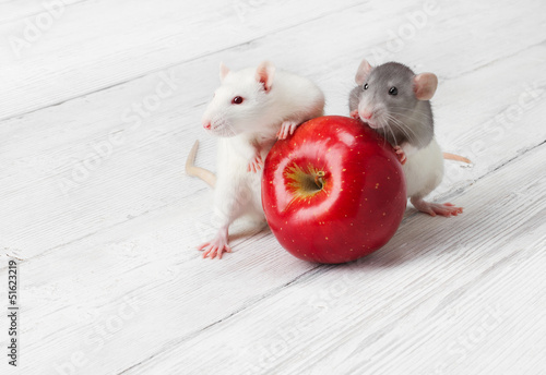 white rats with red apple