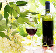 Bottle young wine and ripe grape.Nature background