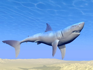 Shark underwater - 3D render