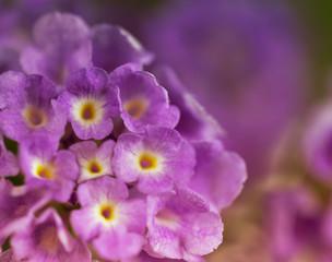 floral background closeup