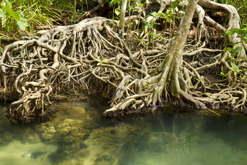 Crystal stream with seawater from the mangrove