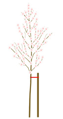 Cherry blossom branch vector background