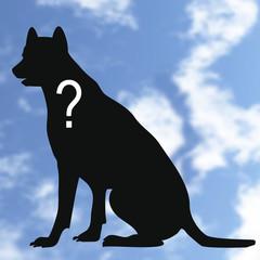 chien, animal, perdu,identité,silhouette,inconnu,?