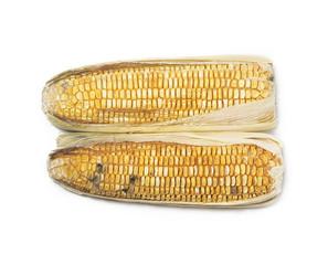 rotten corn