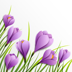 Crocuses. Paper flowers on white background