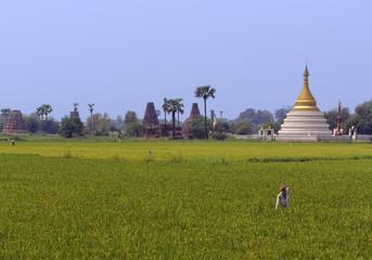 Rural scene in Burma with pagoda in background
