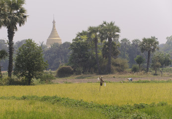 Rural scene in Burma with pagoda in background