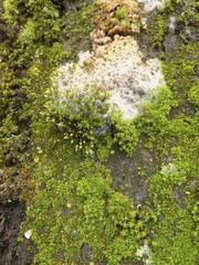 muschio e muffe sulla corteccia di un albero
