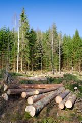 Chopped trees