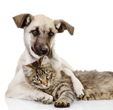dog embraces a cat. isolated on white  - Fine Art prints