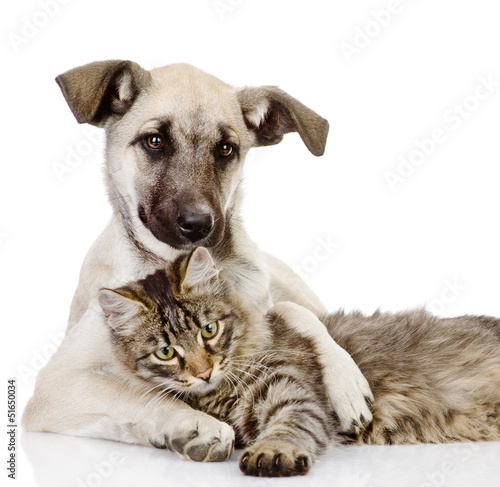 dog embraces a cat. isolated on white