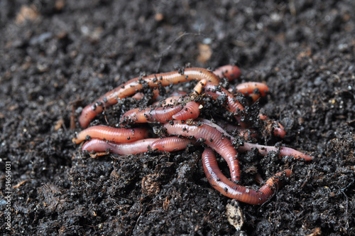 Group of earthworms